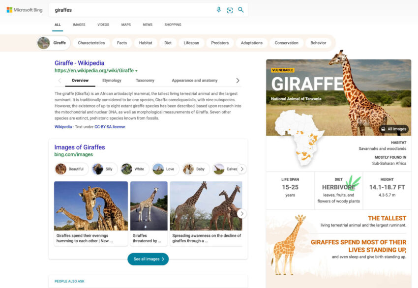Microsoft Bing updates search results interface to make it more visually immersive